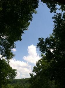 photo (44) sky tree
