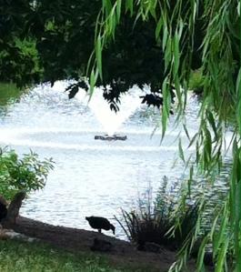 photo Swan Lake