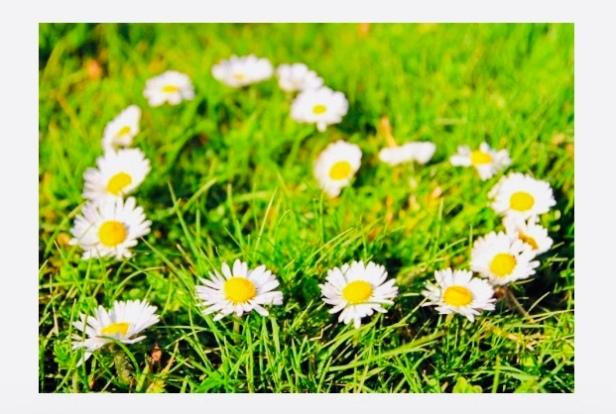 Daisy Photo